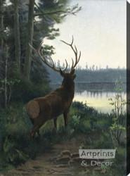 Wapiti Elk - Stretched Canvas Art Print