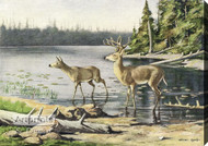 Adirondack Deer by Oliver Kemp - Stretched Canvas Art Print