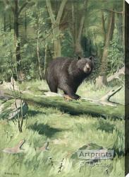Adirondack Black Bear by Oliver Kemp - Stretched Canvas Art Print