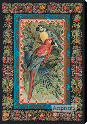 Macaws by JCK - Stretched Canvas Art Print