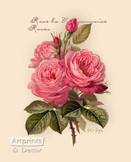 Pink Roses by Paul de Longpre - Art Print