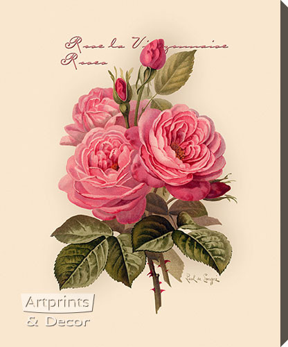 Pink Roses by Paul de Longpre - Stretched Canvas Art Print