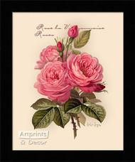 Pink Roses - Framed Art Print