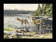 Adirondack Deer - Framed Art Print