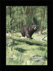 Adirondack Black Bear - Framed Art Print
