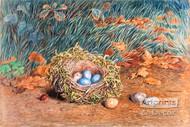 The Birds Nest by W. Hunt - Art Print