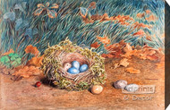 The Birds Nest by W. Hunt - Stretched Canvas Art Print