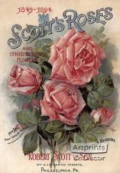 Scotts Roses - Art Print