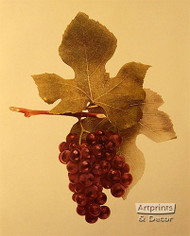 Moyer Grapes - Art Print