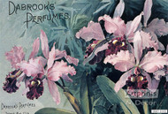 Day brooks Perfume - Art Print^