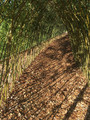 1m Long Living Willow Tunnel Kit (1.5m High )