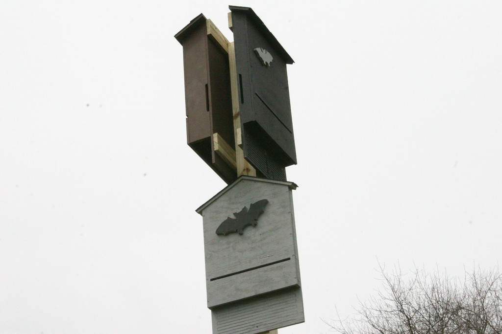 Image result for Bat houses