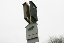 Here are a few bat houses installed