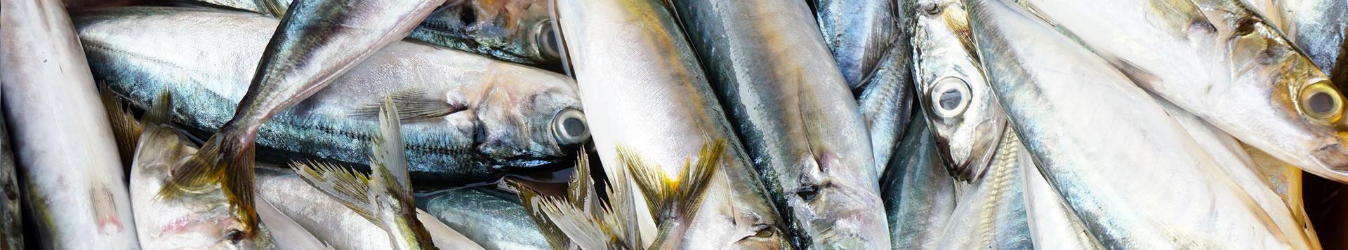 Baitrunner Style Fishing Reels