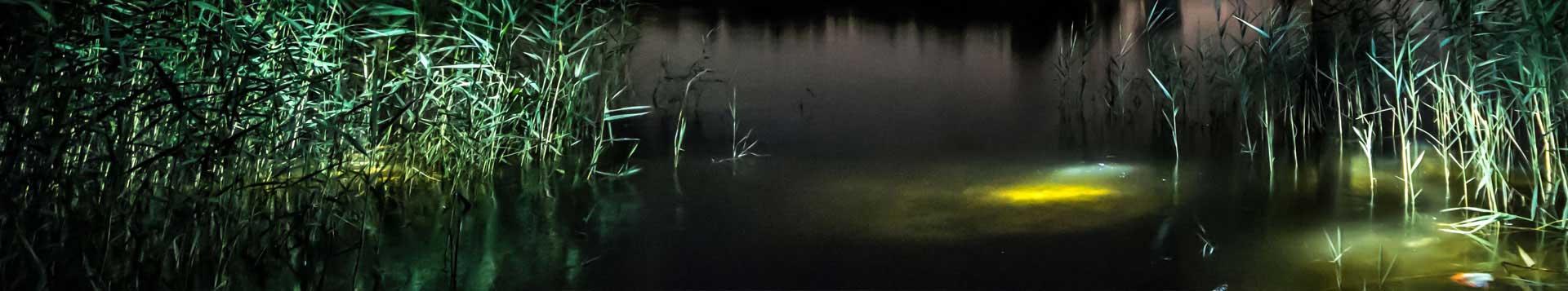 Head Torches & Fishing Lights