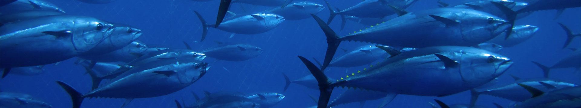 Shimano Stella Fishing Reels