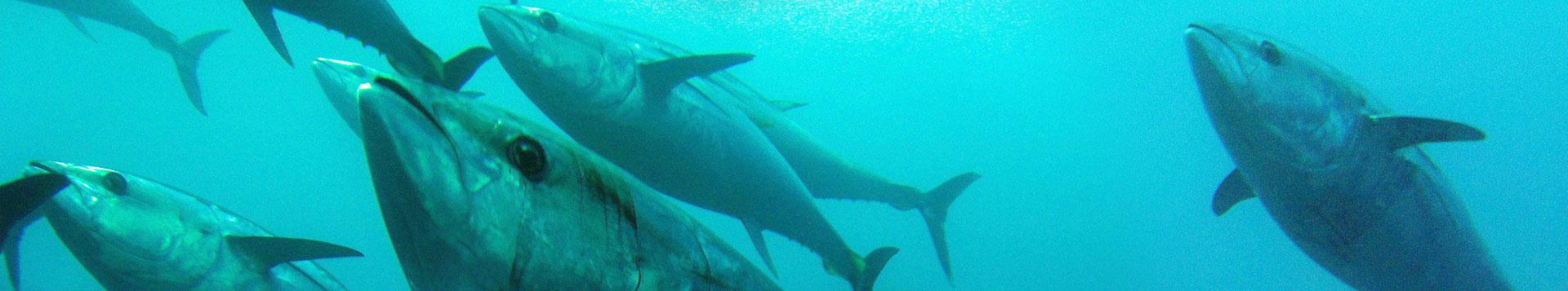 Shimano TCurve Game Fishing Rods