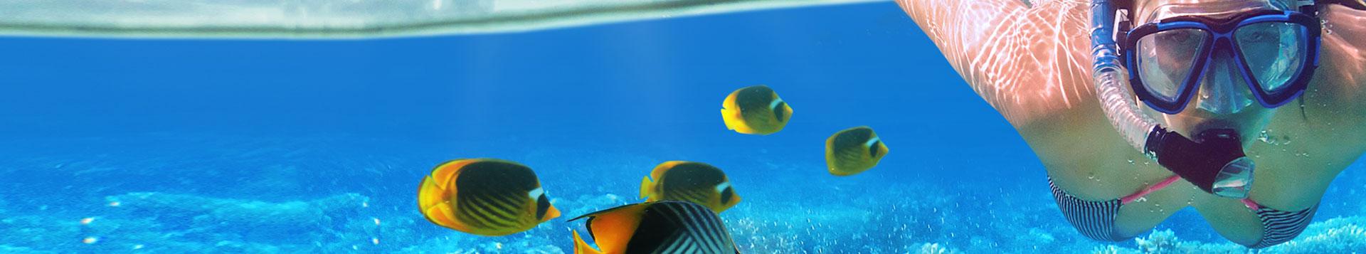 Snorkeling Spearfishing