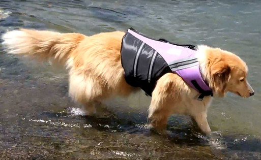dog-life-jackets-water-woofer