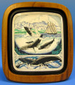 Whales - Scrimshaw