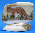 Red Fox Scrimshaw by Dennis Sims