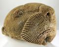 Sea Otter Head