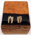 Fossil Wolf Molars