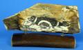 Mammoth Ivory Scrimshaw by G. Vukson