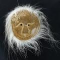 Spirit Mask with Polar Bear Fur | Alaska Whalebone / Fur Mask