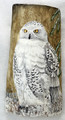 Painted Driftwood - Proud Snowy Owl