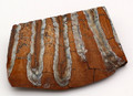 Fossil Siberian Woolly Mammoth Tooth Slice - Small