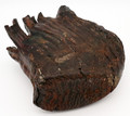 Woolly Mammoth Tooth - Large  | Ancient Fossil Ivory / Specimen