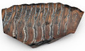 Woolly Mammoth Tooth Slice Med | Ancient Fossil Ivory / Specimen