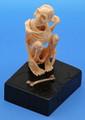 Fossil Walrus Ivory Sceleton with Bone