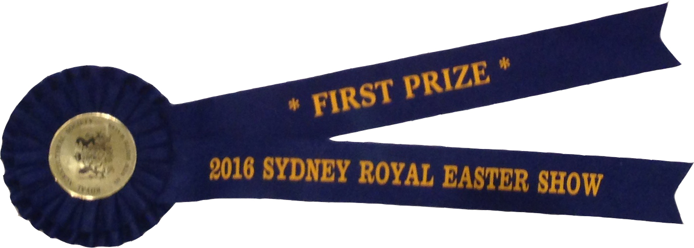 2016-ras-winner-ribbon.jpg