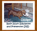 DVD from Dodgers List - Dachshund Back Injury Education & Prevention - Intervertebral Disc Disease (IVDD)
