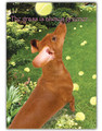 The Grass is Greener Underneath a Wiener Dachshund Card