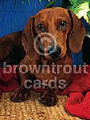 Red Dachshund on Blankets Blank Note Card - 8 Pack