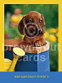 How Pawsitively Perfect - Thank You Cards - 8 pack