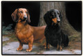Smooth Red and Black Tan Dachshund Outside Doormat or Inside Door