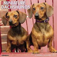 2018 Miniature Dachshunds 12x12 Large 18 Month Calendar