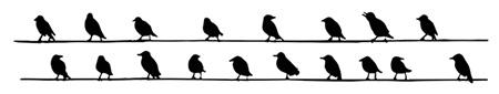 birdlinks-web2.jpg