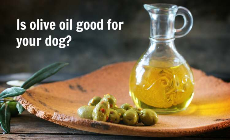 The Role of Olive Oil in Your Dogs Diet - The Olive Tap