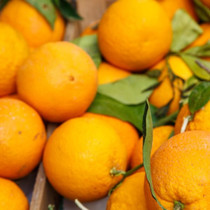 Sorrento Oranges
