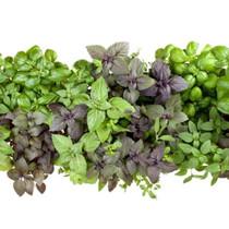 Sicilian Herbs