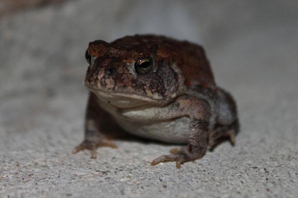 toad-1314493362end.jpg