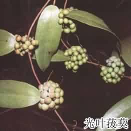 tufuling-1.jpg