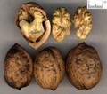 Hetaoren (English Walnut Seed)---胡桃仁(powder100g/bottle)
