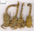 Quanxie ( Scorpion)---全蝎(powder100g/bootle)