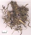 Machixian ( Purslane Herb )---马齿苋